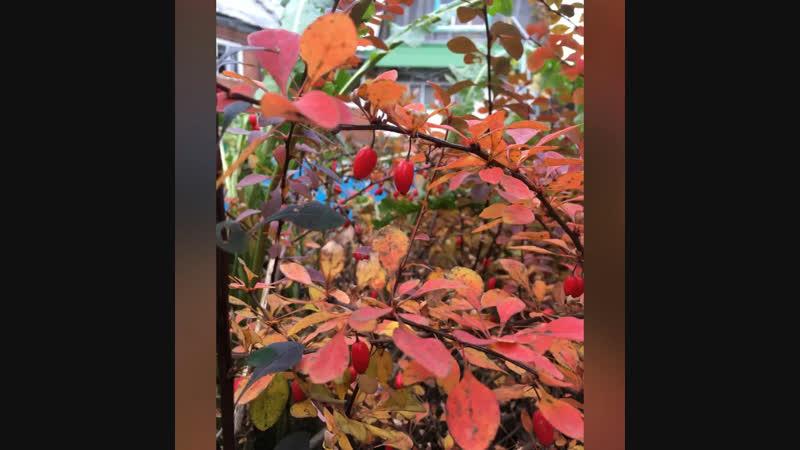 Разноцветная осень.