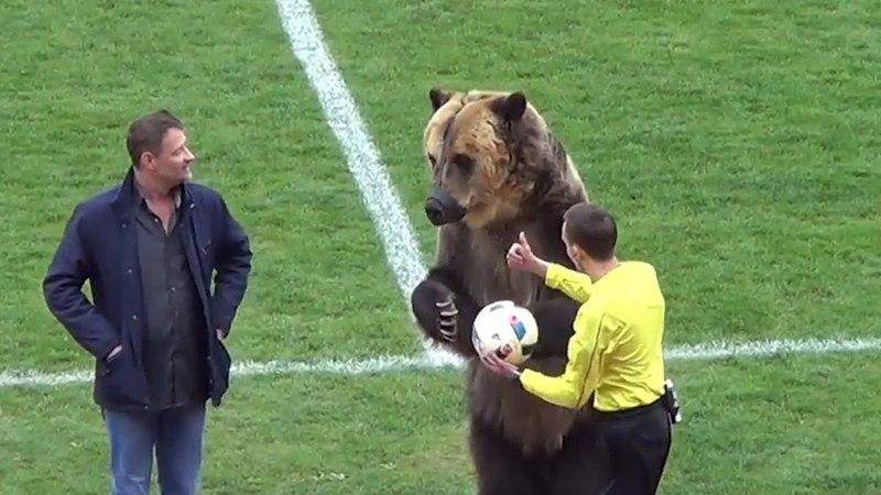 Медведь открыл футбольный матч в Пятигорске