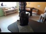 Без кота жизнь не та! 🐈