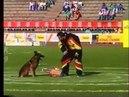 Cheyenne des Loups Mutins FINALE AMNEVILLE 1993 GUY MICHEL
