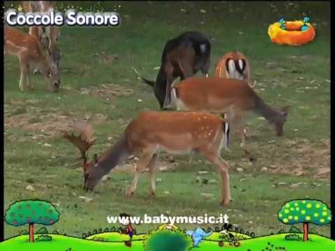 Alla scoperta degli animali - Documentari per bambini di Coccole Sonore