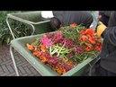 Кокенхов 2 Восхитительный весенний парк тюльпанов Амстердам Марина Линдхолм