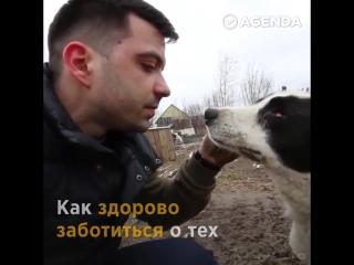 Александр Мезенцев помогает животным оставшимся без дома.