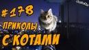 Я РЖАЛ ПОЛ ЧАСА - Приколы с котами ДО СЛЁЗ - Смешные коты и кошки 2018