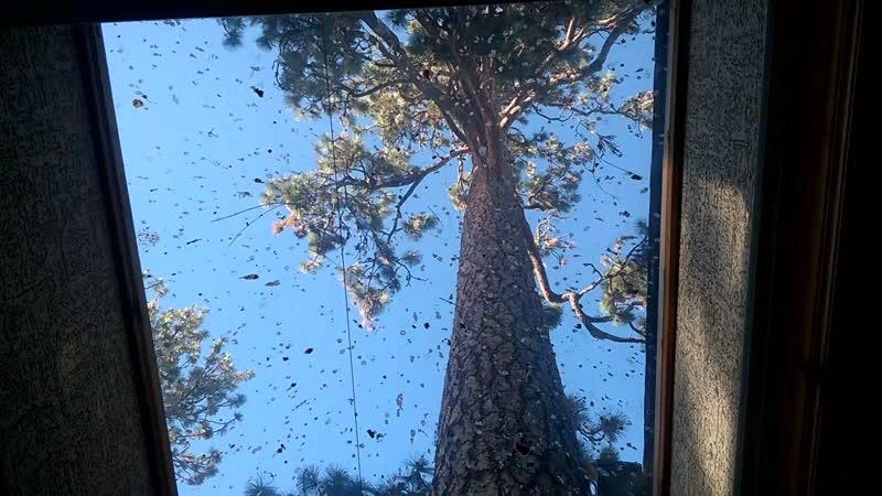 деревья в ресторанчике г.Бенд