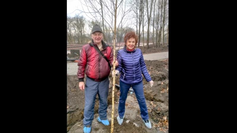 Посадка деревьев в парке Комсомольский 15.12.2017.