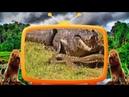 Battle Crocodile vs Giant Snake Best Compilation Amazing Footage 2018