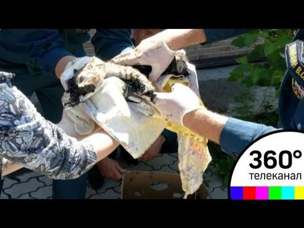 В Приморье спасли котят которых выбросили в горячий гудрон