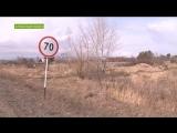 Мёртвые коровы вдоль дороги в Хакасии