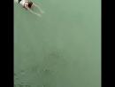 Сукко.Кипарисовое озеро.
