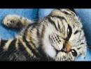 моя любимая кошечка Луми.Девочка