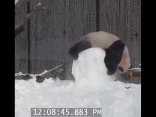 Так вот кто постоянно ломает снеговиков...