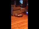 Kedi antreman yapıyor