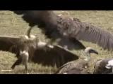 X-Mode_-_В мире животных_Animals
