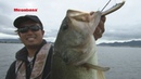 MEGABASS MOVIE 144 ITO SHINER 実釣