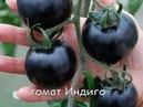 ЧЕРНЫЕ ТОМАТЫ -Выращивание,уход,полезные свойства
