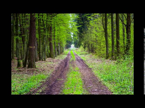 2시간 연속 듣기 | 한적한 숲 속 소리와 연주곡 | 릴렉스 피아노 | 뉴에이지 연주442