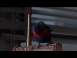«Извини,такое со мной впервые...».Эйс Вентура Розыск домашних животных(фильм 1993)