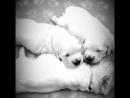 Щеночки Баси и Макса 3 сладких комочка