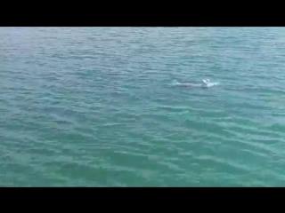 дельфины.mp4