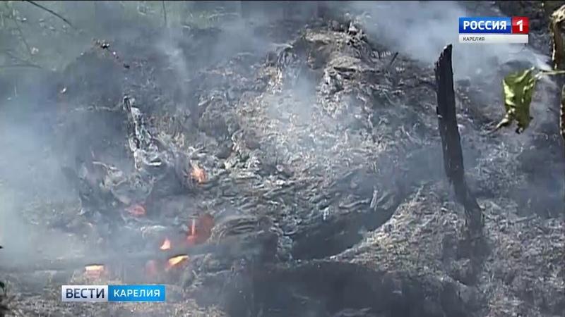 Противопожарный режим объявлен в карельских лесах