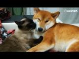 Кошки и собаки — друзья или враги?