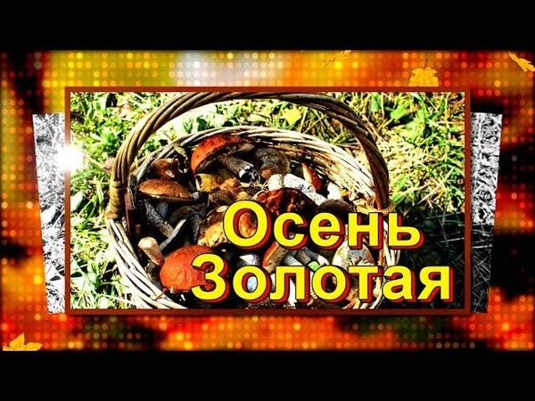 Осень осень. Осень Золотая снова к нам пришла. Смотреть видео про осень. Видео открытки.