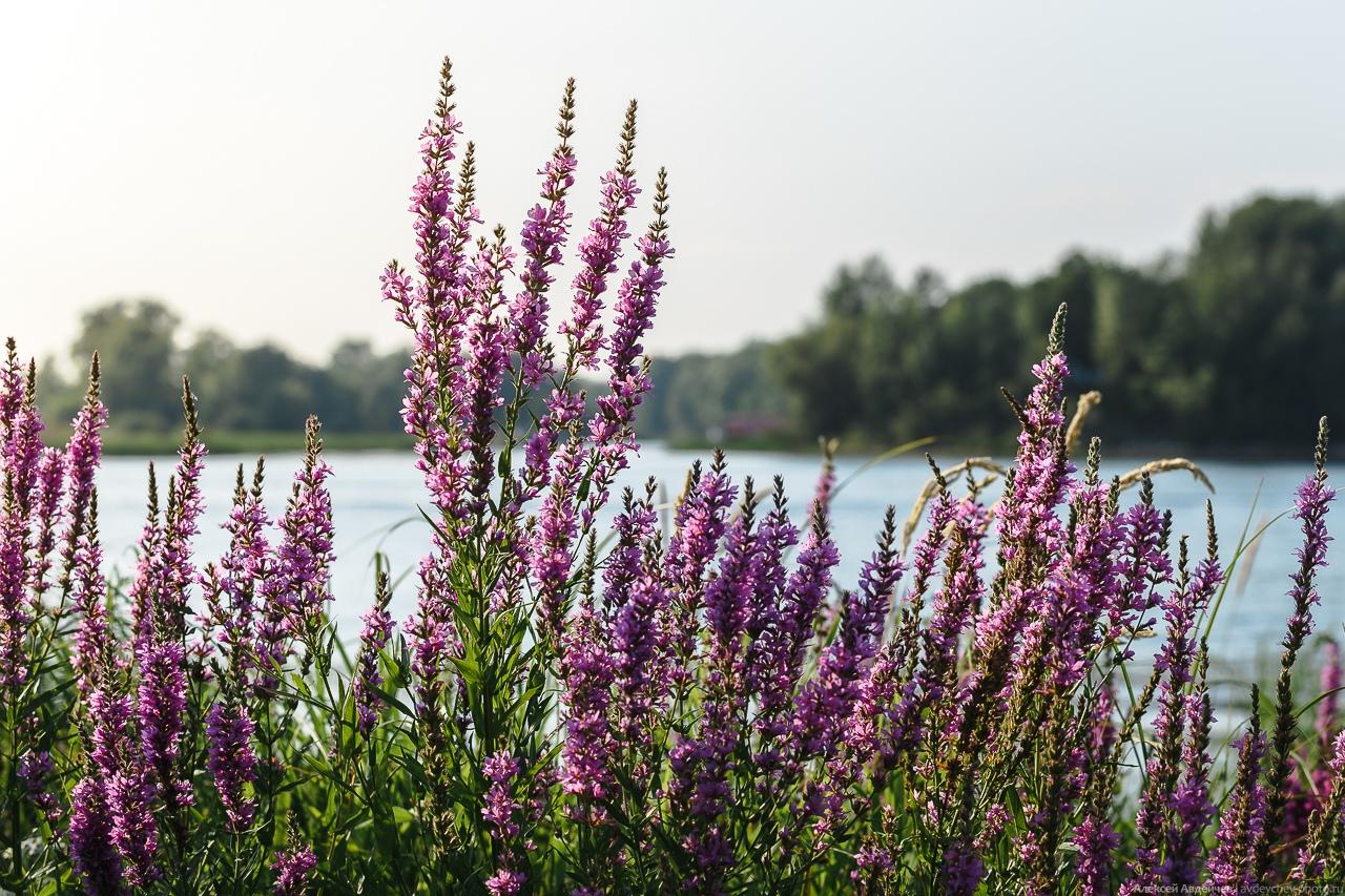 Устье реки Сок