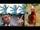 Bolsonaro corre dos debates como uma galinha desesperada enquanto o judiciário persegue o Lula.