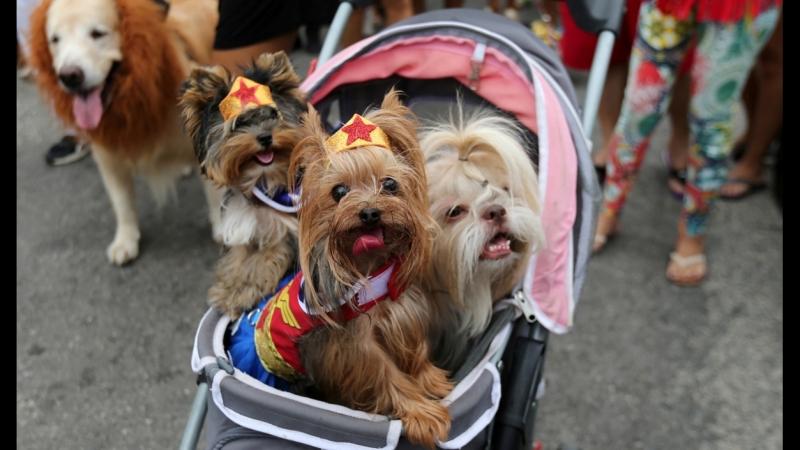 Собаки в цветных костюмах, перьях и боа продефилировали на карнавале в Рио-де-Жанейро