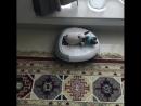 робот пылесос уборка ковров