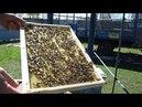 Расширение пчелиных гнезд Постановка вощины Подготовка к выводу маток