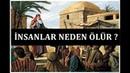 Hz Musa'ın Allah'a Neden İnsanların Canlarını Aldığını Sorması I Mesnevi'den Hikayeler