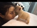 Cute Dogs and Cats Doing Funny Things 2018 🔴 Cute is not Enough