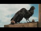 Смешные отрывки из фильма Паутина Шарлотты