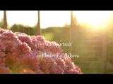 Имиджевый ролик для Parf de Maniac Perfume.