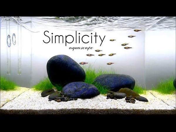 Aquascaping GAME OF RIVER STONE (SIMPLICITY) one month update