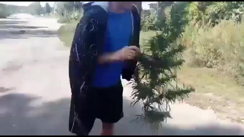 Коноплянная ёлка 😉😉😂