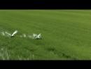 К.Никольский - Птицы Белые Мои HD720p