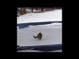 Кошки и коты весело играют в снегу )))