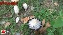 что за грибочки смотреть грибникам