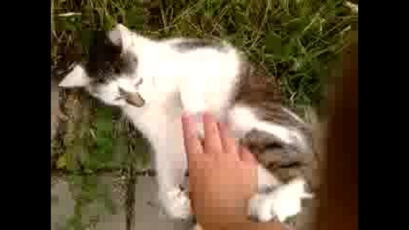 Play with neighbour's cat