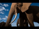 Clash Between Lions, Rhinos, and Elephants Has Surprise Ending