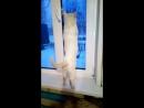 Белый кот моет окна к Пасхе
