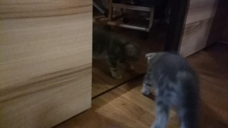 Миа и зеркало