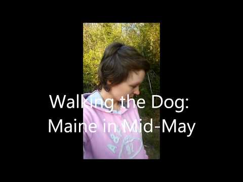 Mid-May Walk with My Dog in Maine