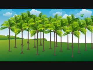 Palm Leaf Plate Manufacturing