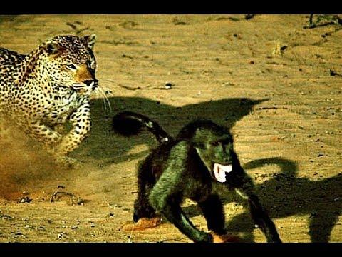 Необычная жизнь животных. Странные выходки.