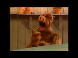 Alf Quote Season 1  Episode 11 Просто