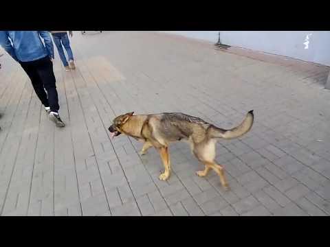 🚀Street Punk Brothers🚀 Уличный пёс Гоша